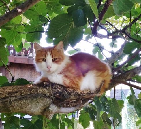 chatons-cimetiere
