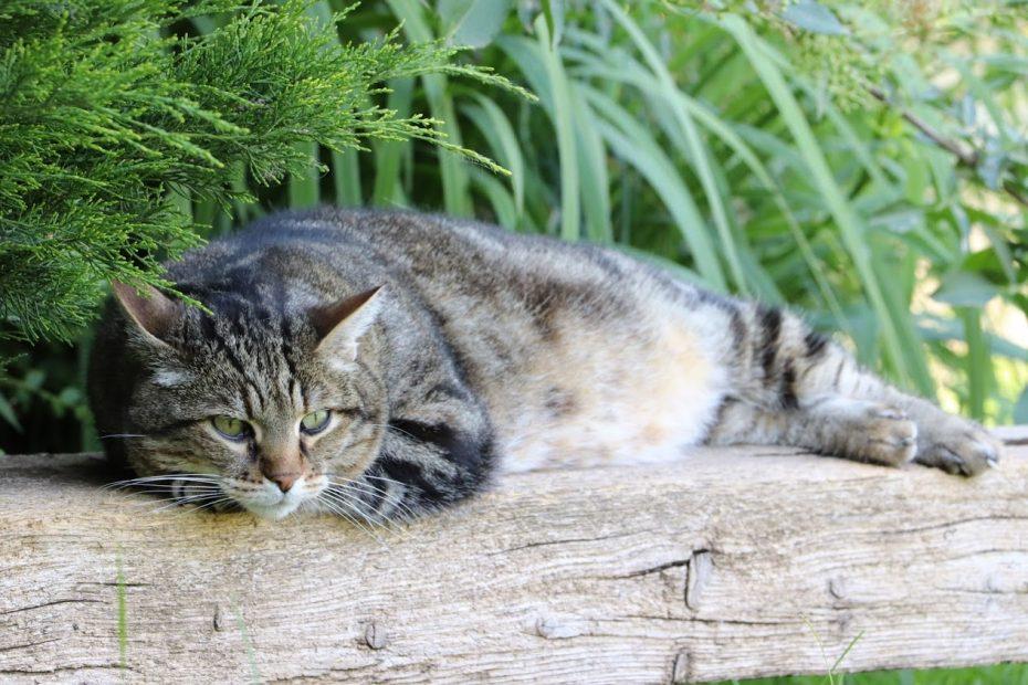 Mimi alias Kiwi est chat mâle de 7 ans. Chat caractériel et possessif. Il tolère ses congénères mais ce qu'il apprécie le plus, ce sont les caresses et la présence humaine. Nous lui recherchons une famille qui vit en maison avec un grand espace.