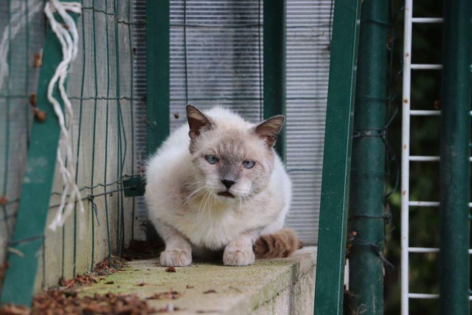 Yukon, chat mâle d'environ 5 ans. Trouvé près du refuge dans un mauvais état, Yukon est maintenant remis sur pattes ! Nous lui recherchons une famille quit vit en appartement, sans enfants en bas âges car Yukon est un chat craintif, mais proche de l'homme.