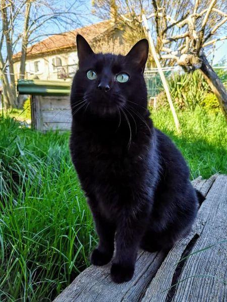 Missy est une chatte de 3 ans, un peu craintive mais très câilne. Elégante, volontiers indépendante, elle aime bien nous suivre quand même! Placement en maison avec jardin.