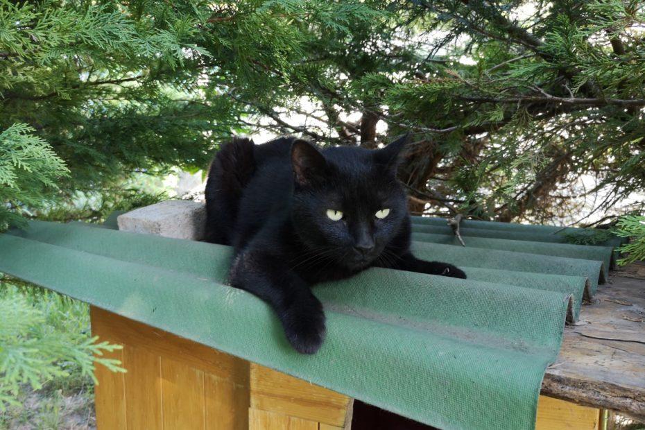 Bougnat, mâle d'environ 8 ans. Il a un grand besoin de présence et d'affection. Il se sent en sécurité à l'intérieur mais il appréciera beaucoup d'avoir un accès à un grand balcon ou une terrasse. Une adorable panthère noire à découvrir.