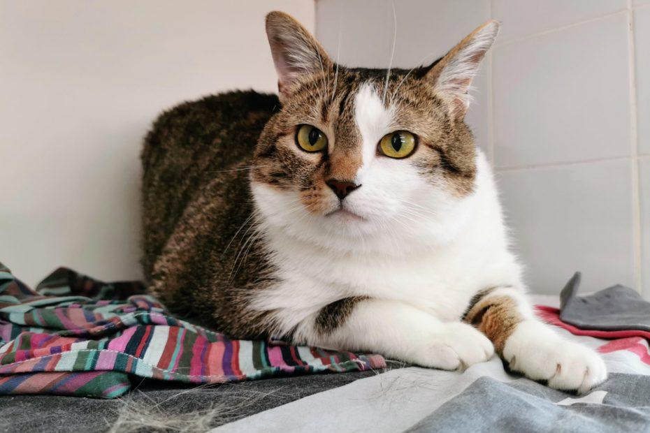 Loum's est un mâle né en 2015. C'est un chat gentil, qui apprécie des moments câlin mais qui est assez solitaire et indépendant. Placement avec un accès extérieur obligatoire.
