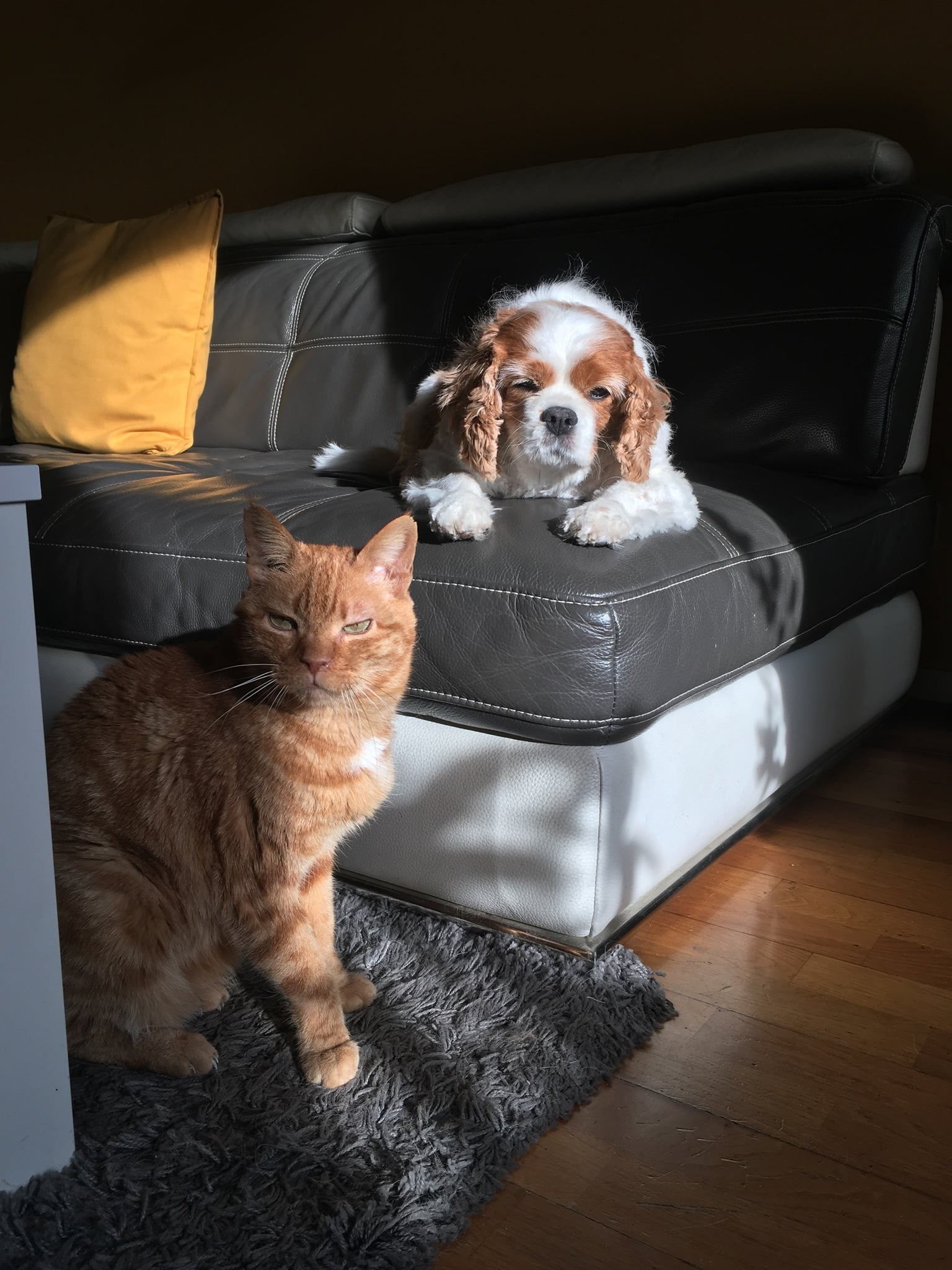 Le chat roux, Garfield