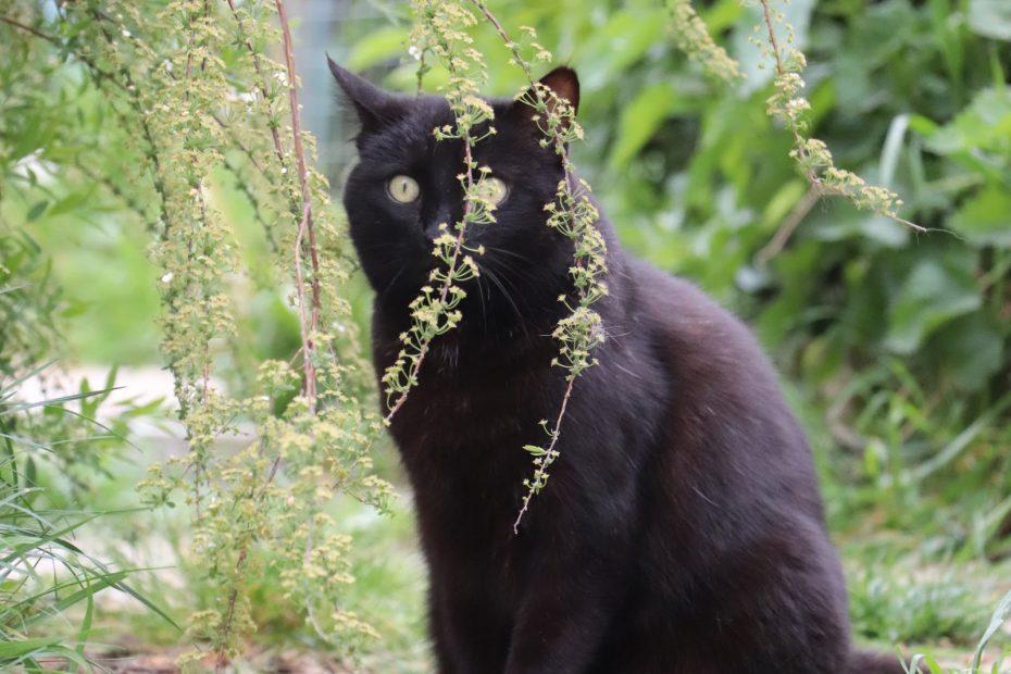 Meye chatte femelle de 11 ans. Meye est une chatte calme qui aime sa tranquillité. Elle est caractérielle et n'aime pas la présence des autres chats. Placement avec un accès extérieur sans autres animaux.