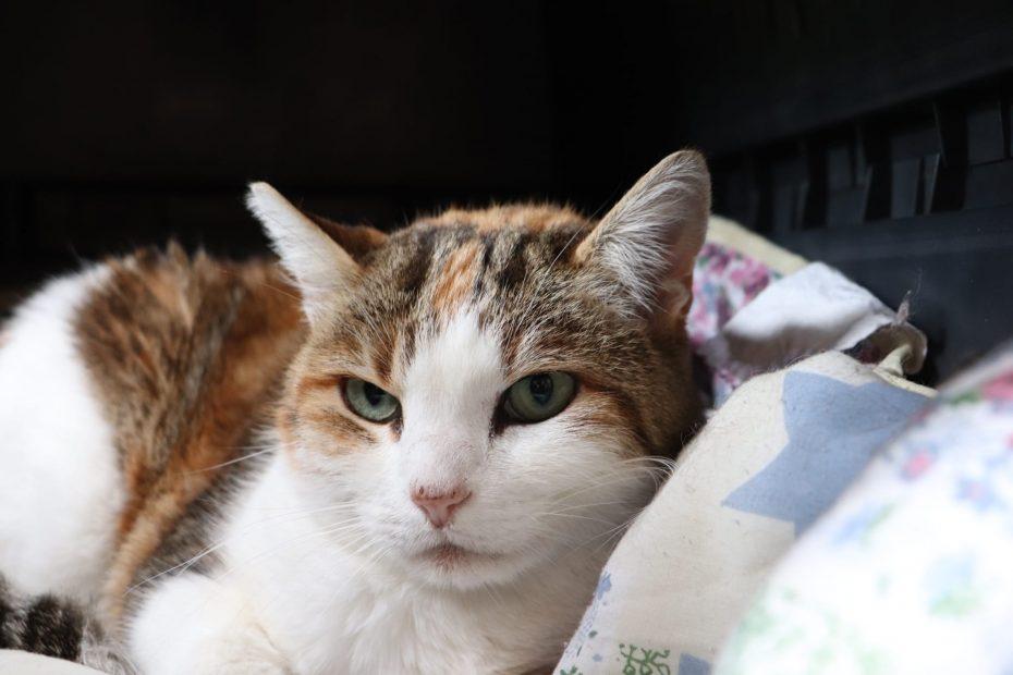 Mimine chatte née en 2009. Craintive au premier abord, mais très gentille. Bavarde et câline ! Placement maison ou appartement avec accès extérieur.